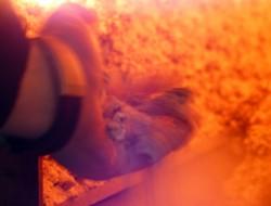 KCP Anthrazit sauberer Abbrand ohne Verschlackung