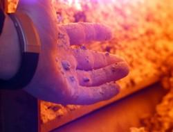 KCP Anthrazit liefert sauberen Abbrand & reibungslosen Ascheaustrag